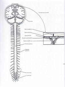 Dagmara Miszczak - Fizjoklinika Gorzów - Fizjoterapia, Akupunktura i Masaż - terapia czaszkowo-krzyżowa
